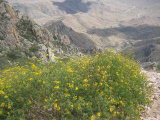 Yellowbushmtn
